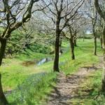 Blackdown Rings South Devon