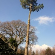 Pittman Trees - Tree Surgeons & Forestry Contractors