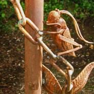 Tom May - Nature Pole, Grasshopper close-up