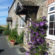 Jasmine Cottage - Holiday Property in Hallsands