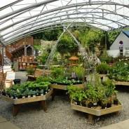 Avon Mill Garden Centre Deli Cafe Art Gallery