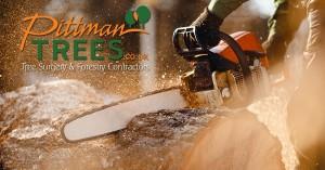 Pittman Trees Interview